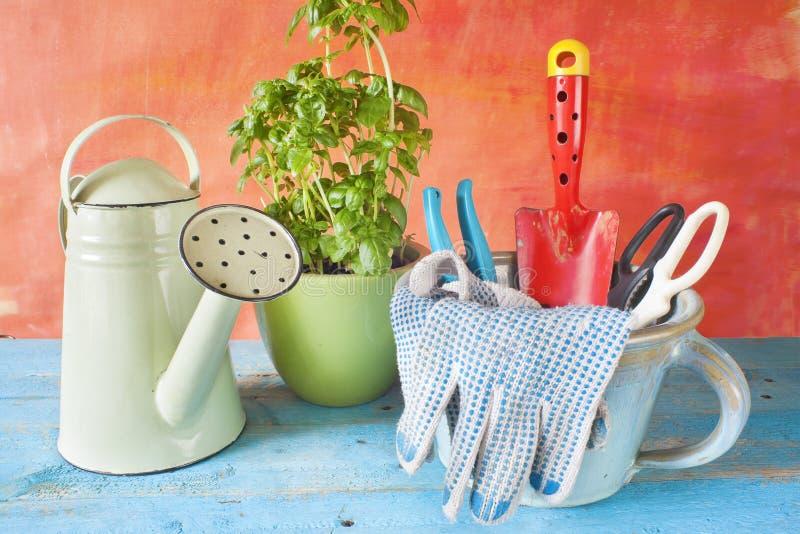 Садовничая инструменты и базилик стоковое изображение rf