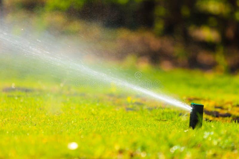 Садоводство Вода спринклера лужайки распыляя над травой стоковое изображение rf