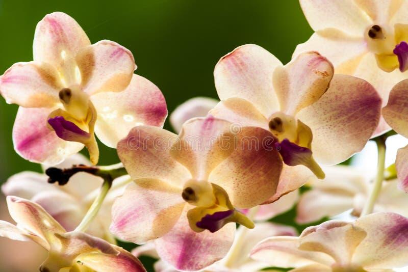Сад орхидеи Сингапура стоковые изображения