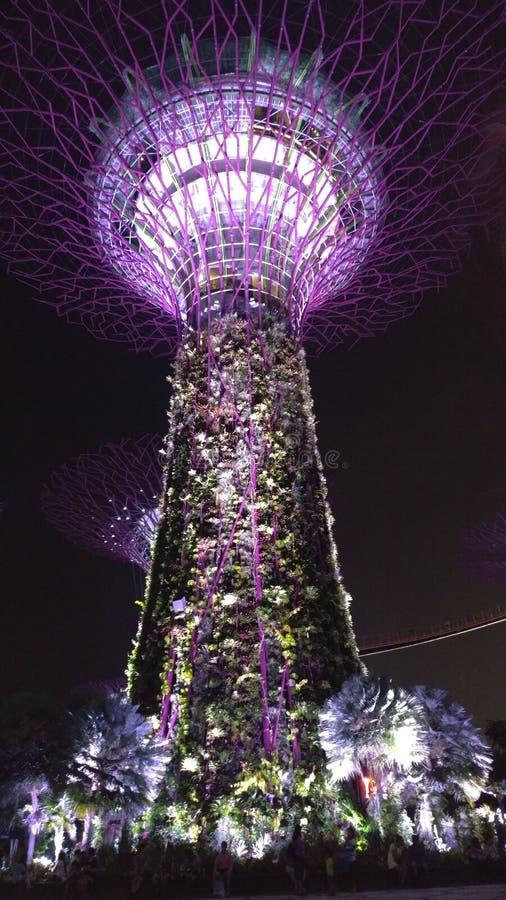 Сад Сингапур заливом на ноче стоковое изображение rf