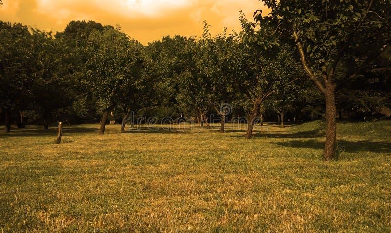 Сад сновидений стоковое изображение rf