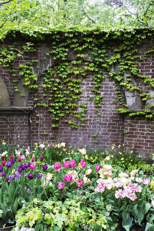 Сад стены плюща стоковое фото rf