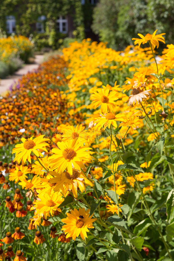Сад с красивым flowerbed желтого Heliopsis стоковые изображения rf