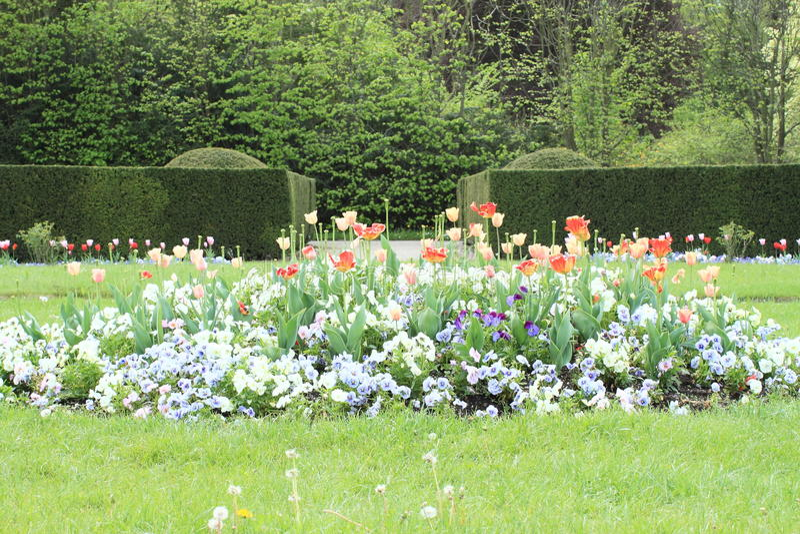 Сад с тюльпанами и pansies стоковые фотографии rf