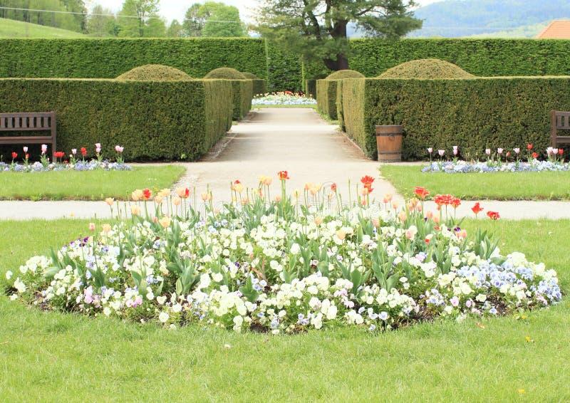 Сад с тюльпанами и pansies стоковые фото