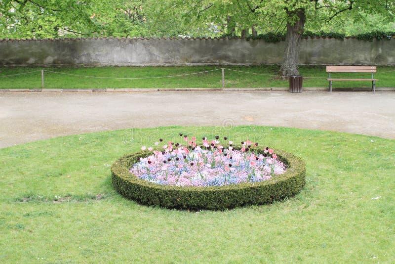 Сад с тюльпанами и pansies стоковое фото rf