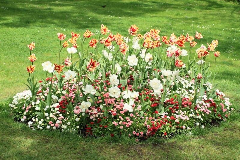 Сад с тюльпанами стоковые фотографии rf