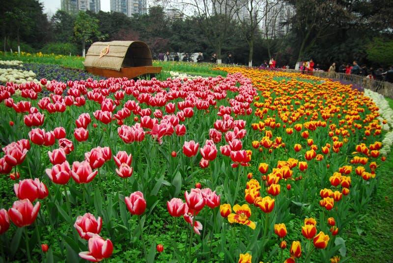 Сад тюльпана стоковые изображения