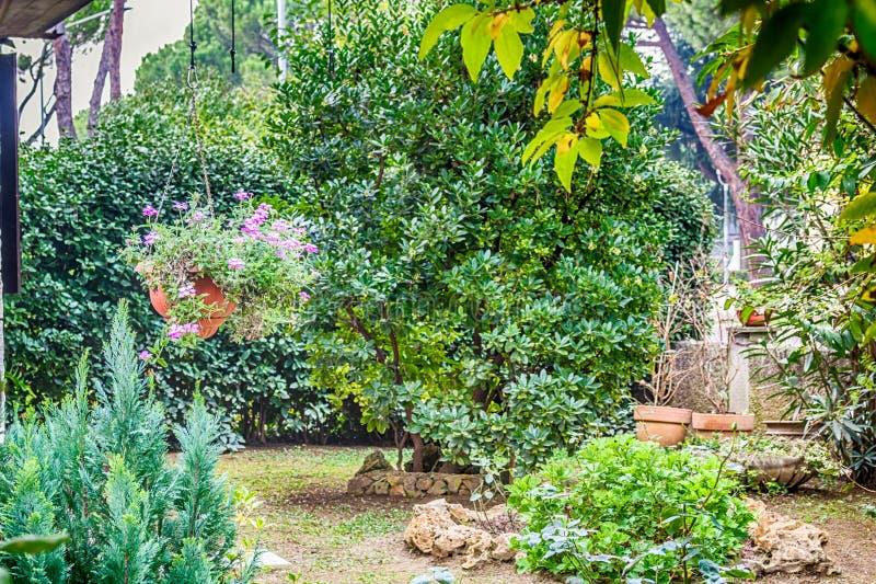 Сад утеса с вербенами смертной казни через повешение стоковое фото