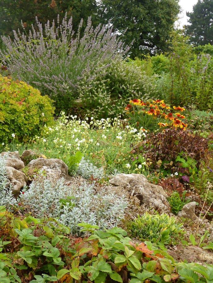 Сад утеса цветка с лавандой и высокогорными заводами стоковое изображение rf