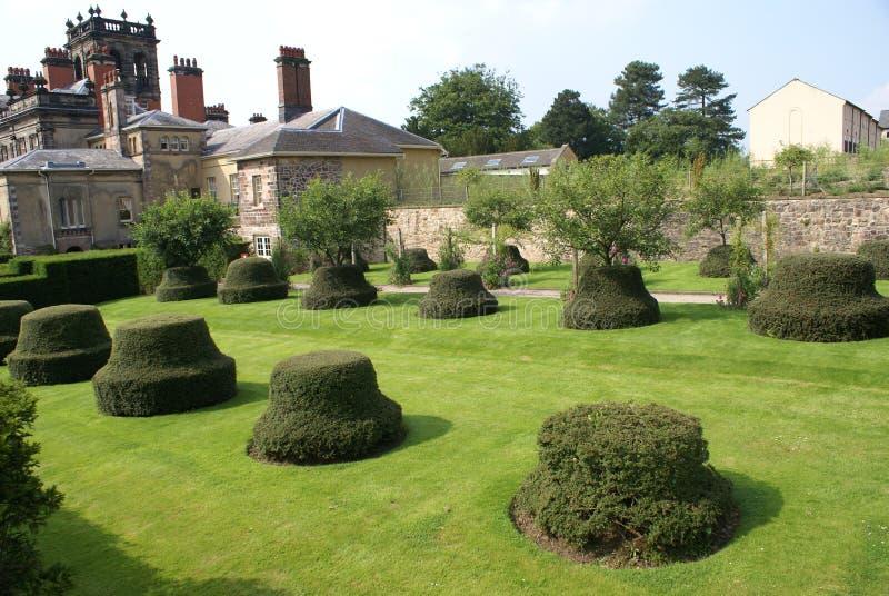 Сад фигурная стрижка кустов yew деревья фигурной стрижки кустов стоковые изображения