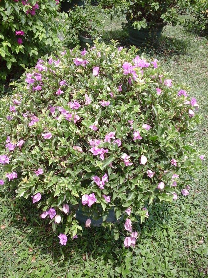 сад цветков лезвия предпосылки красивейший стоковое изображение