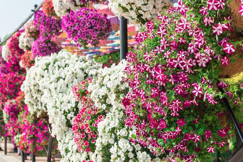 Сад чуда Дубай с над миллионом цветками стоковая фотография rf