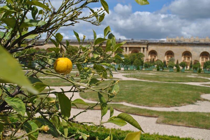 сады Версаль стоковое изображение rf