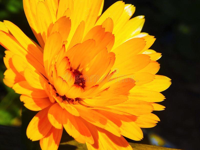 Сады весеннего времени стоковое изображение