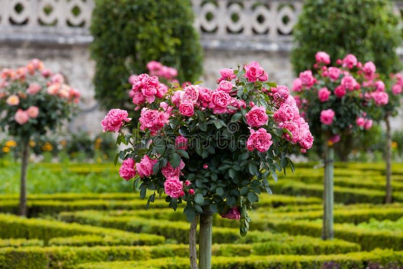 Download Сады и Замок de Villandry стоковое изображение. изображение насчитывающей кухня - 33738797