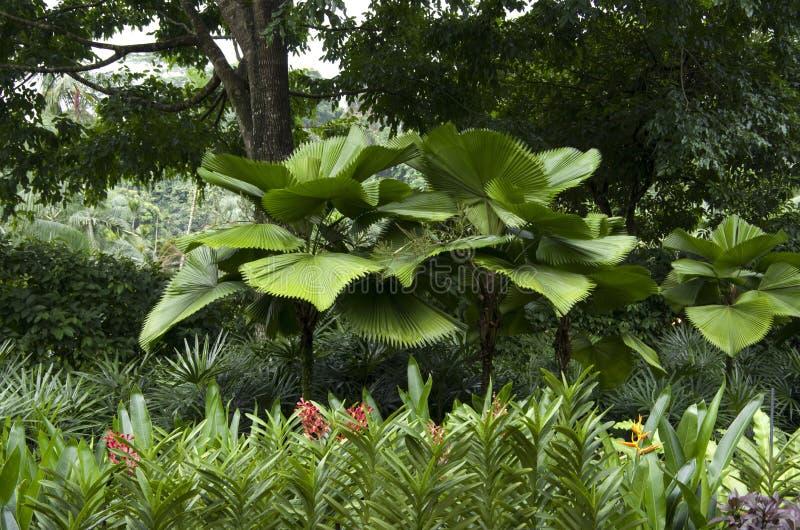 Сады Сингапура ботанические стоковое фото