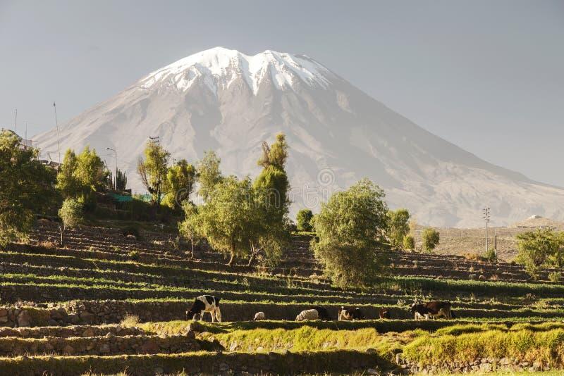 Сады Inca с животноводческими фермами и вулканом Misti стоковое изображение