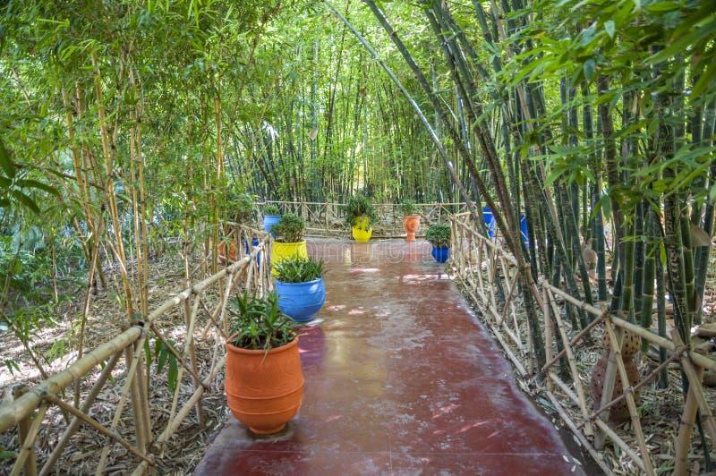 Сады Majorelle в Marrakesh стоковое фото