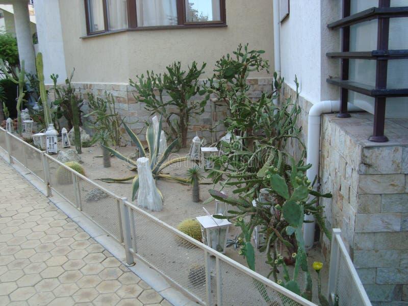 Сад Cactoo стоковая фотография rf