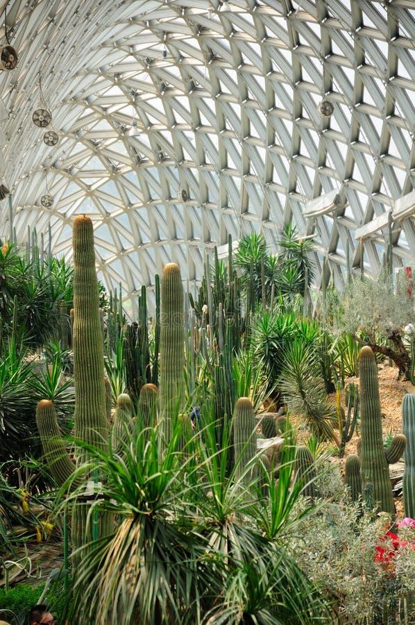 Сад Chenshan парника пустыни ботанический стоковые фотографии rf