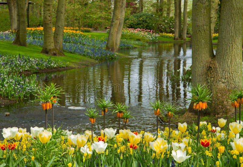 Сад Keukenhof весны, Нидерланды стоковое изображение