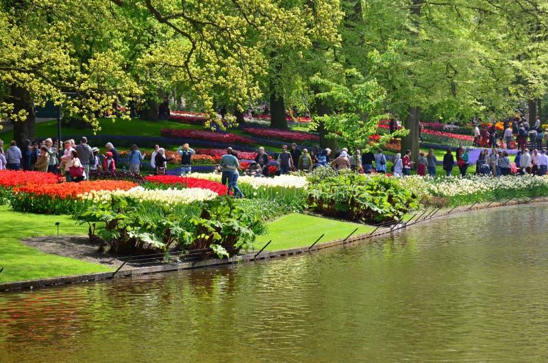 Сад Keukenhof, Нидерланды - 10-ое мая: Красочные цветки и цветение в голландском саде Keukenhof весны который f мира самый большо стоковое фото
