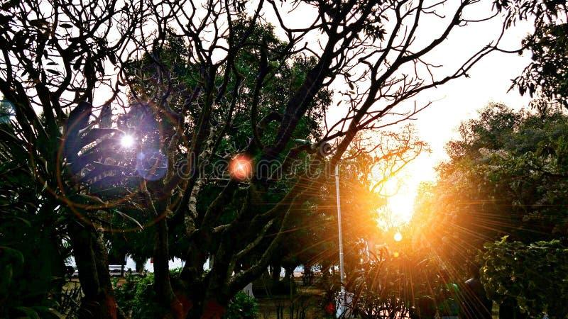 Сад Raj bhawan стоковая фотография
