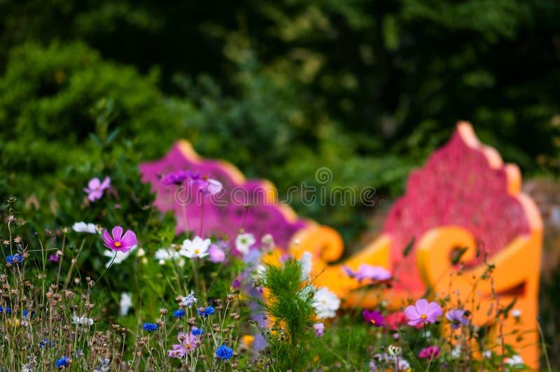 Сад Wildflower и космос стендов внешний расслабляющий стоковое фото rf