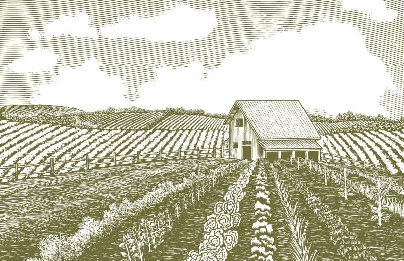 Сад Woodcut бесплатная иллюстрация