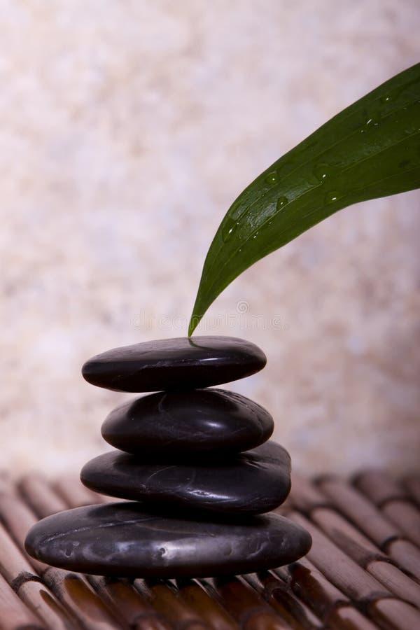 сбалансированный зеленый касатьться утесов камушка лилии листьев стоковые изображения rf