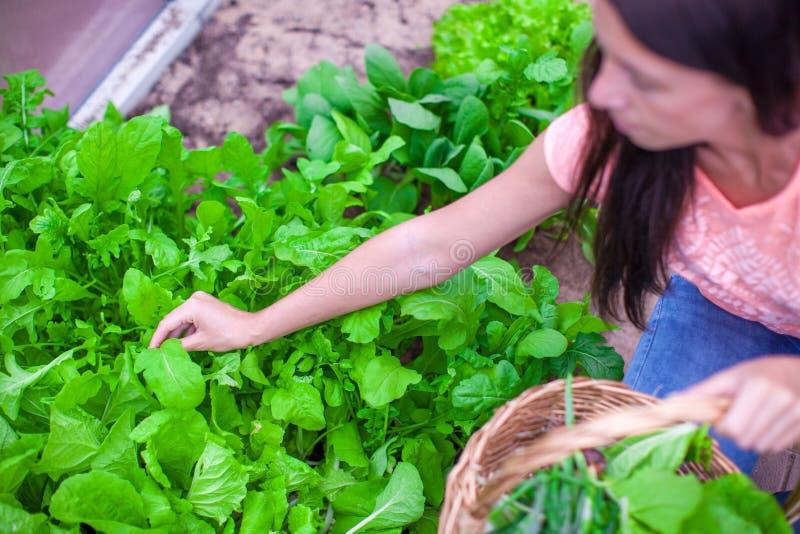 Download Сборы молодой женщины в парнике Стоковое Изображение - изображение насчитывающей сад, счастливо: 40586081