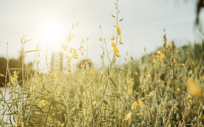 сбор винограда иллюстрации части цветка предпосылки сфокусируйте мягко для вашего дизайна текста, deco стоковая фотография