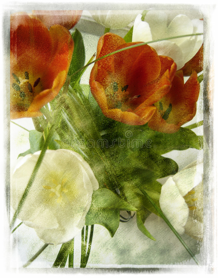 сбор винограда цветка ретро иллюстрация штока
