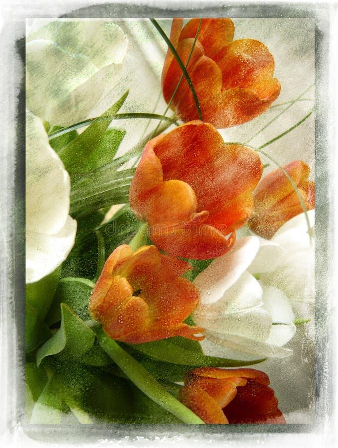 сбор винограда цветка иллюстрация вектора