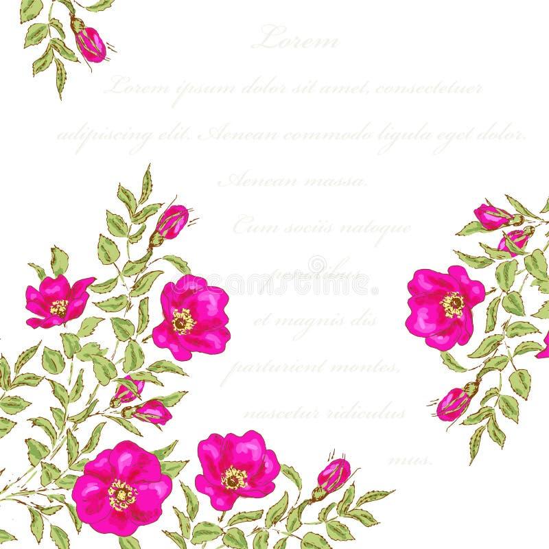 сбор винограда иллюстрации части цветка предпосылки иллюстрация вектора