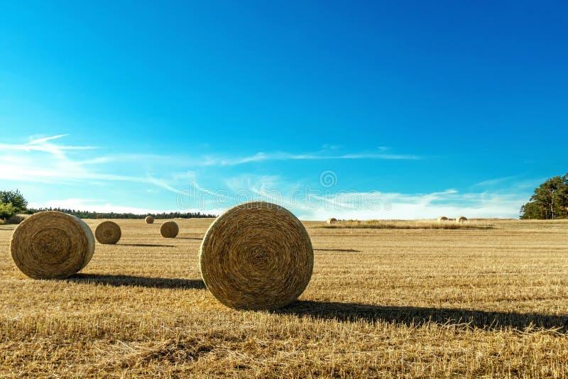 Сбор в сельском ландшафте стоковое фото