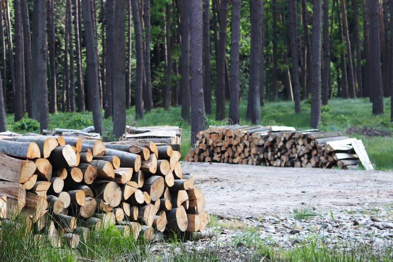 Сбор древесины в лесе спиленные журналы лежит в woodpile Топление предпосылок в деревне Промышленное обезлесение стоковые изображения rf