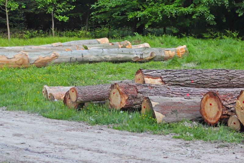Сбор древесины в лесе спиленные журналы лежит в woodpile Топление предпосылок в деревне Промышленное обезлесение стоковая фотография