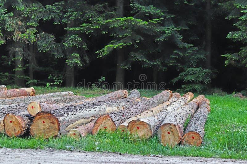 Сбор древесины в лесе спиленные журналы лежит в woodpile Топление предпосылок в деревне Промышленное обезлесение стоковые изображения
