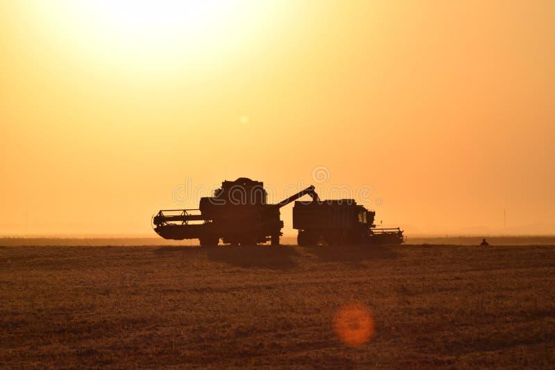 Сбор зернокомбайнами на заходе солнца стоковая фотография rf
