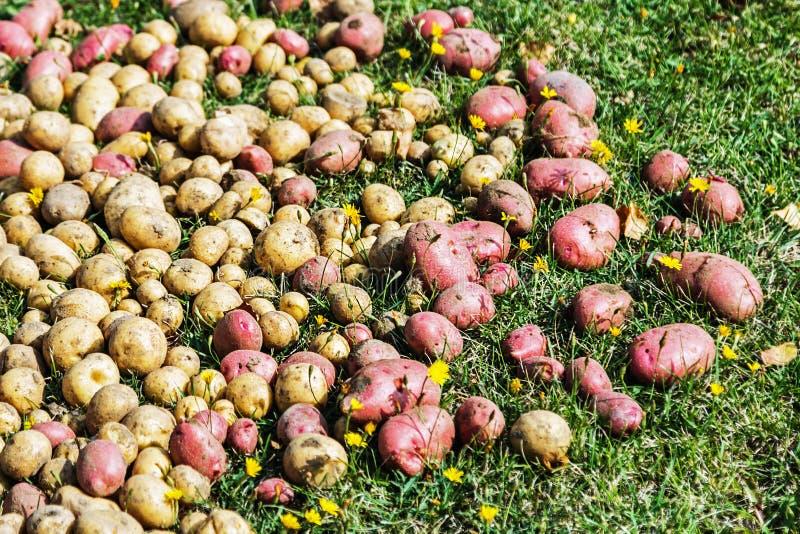 некоторые картинки сбор последней картошки могла фильмах