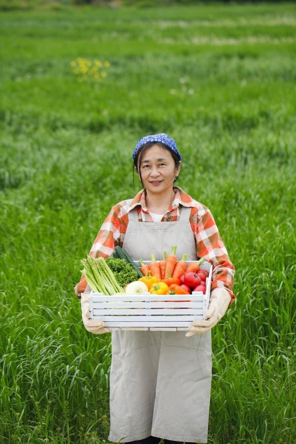 Сбор овощей стоковое фото rf