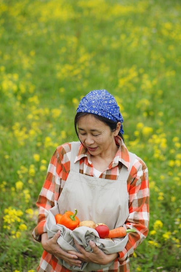 Сбор овощей стоковые изображения