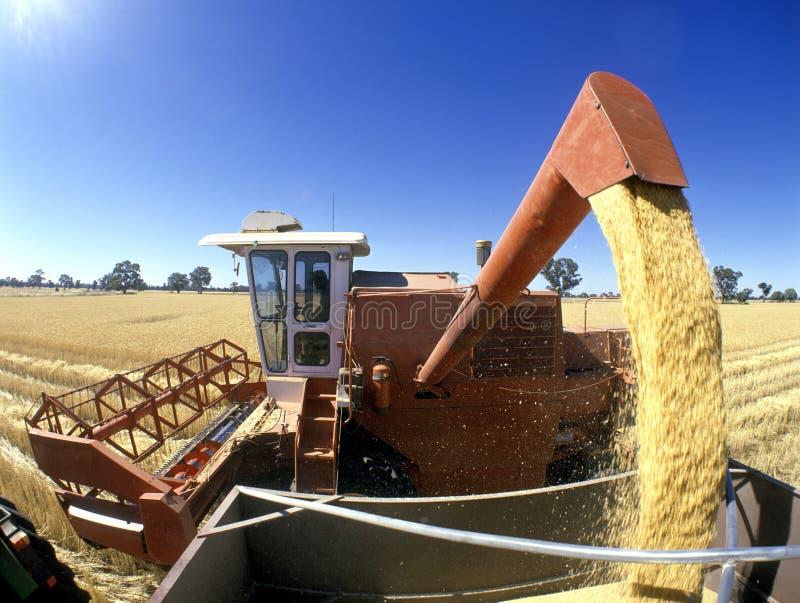 Сбор пшеницы, Австралия стоковая фотография rf