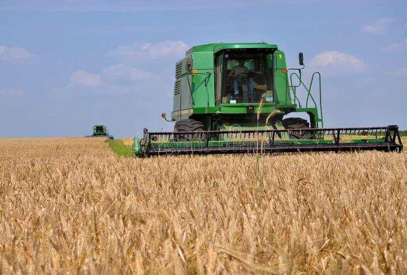 Сбор пшеницы в поле стоковая фотография