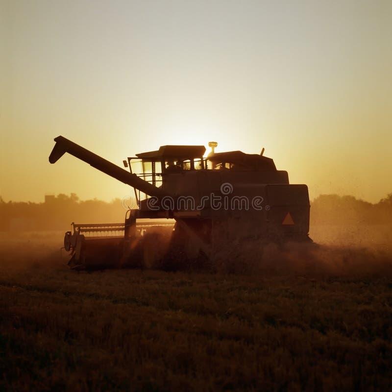 Сбор пшеницы как наборы солнца стоковое изображение rf
