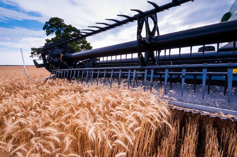 Сбор пшеницы стоковая фотография rf