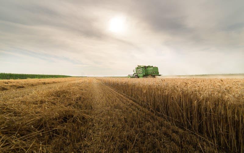 Сбор пшеничного поля с зернокомбайном стоковые изображения rf