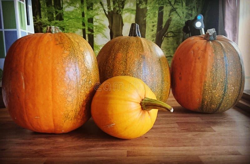 Сбор хеллоуина стоковая фотография rf